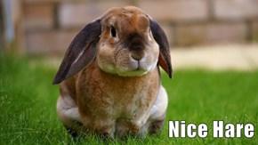 Nice Hare