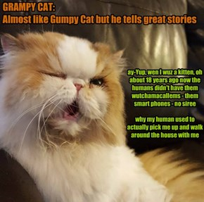 GRAMPY CAT:  Almost like Gumpy Cat
