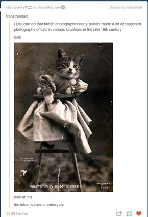 Old Timey LOLcats! :D