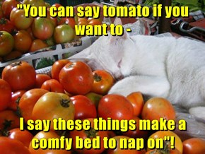 """You can say tomato if you want to -  I say these things make a comfy bed to nap on""!"