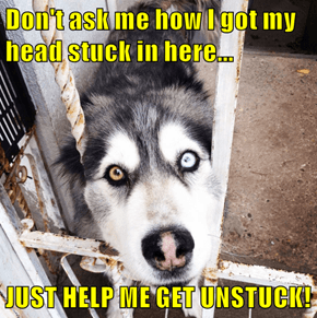 Don't ask me how I got my head stuck in here...  JUST HELP ME GET UNSTUCK!