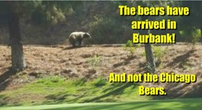 The bears have arrived in Burbank!
