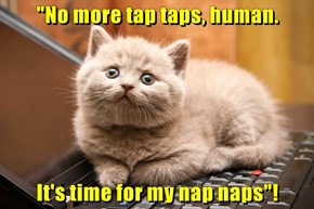 """""""No more tap taps, human.  It's time for my nap naps""""!"""