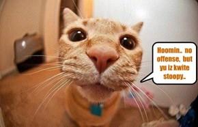 Diplomatic kittie..