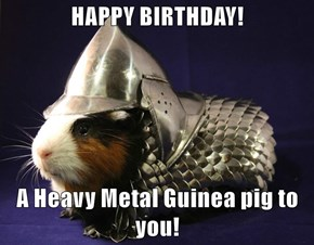 HAPPY BIRTHDAY!  A Heavy Metal Guinea pig to you!