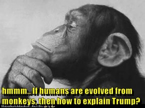hmmm.. If humans are evolved from monkeys, then how to explain Trump?