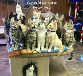 Sylvia's cheez-kitteh                                                             prayer circle