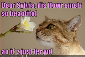 Dear Sylvia, dis flowr smelz  so beaotifol  an it`z just fer yu!