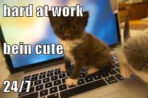 hard at work bein cute 24/7
