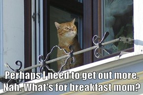Perhaps I need to get out more.  Nah. What's for breakfast mom?