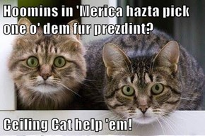 Hoomins in 'Merica hazta pick one o' dem fur prezdint?  Ceiling Cat help 'em!