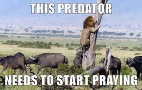 THIS PREDATOR  NEEDS TO START PRAYING