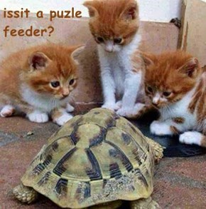 issit a puzle                             feeder?