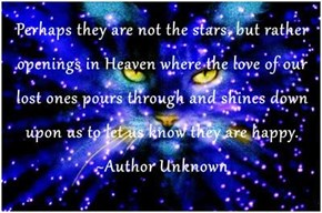 Perhaps they are not the stars, but rather openings in Heaven where the love of our lost ones pours through and shines down upon us to let us know they are happy. ~Author Unknown