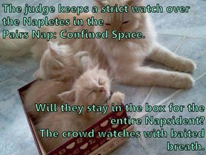 The judge keeps a strict watch over the Napletes in the                                                                     Pairs Nap: Confined Space.   Will they stay in the box for the entire Napsident?