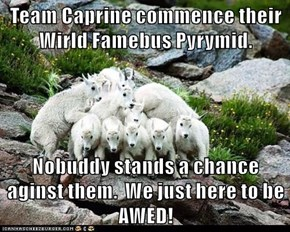 Team Caprine commence their Wirld Famebus Pyrymid.  Nobuddy stands a chance aginst them.  We just here to be AWED!
