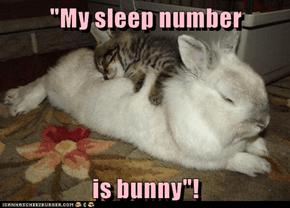"""My sleep number  is bunny""!"