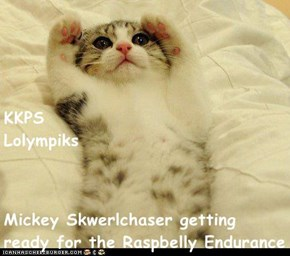 KKPS                                                   Lolympiks Mickey Skwerlchaser getting ready for the Raspbelly Endurance