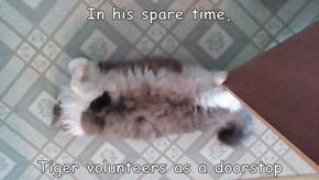 As a kitten, he wuz a paperweight