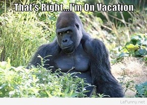 That's Right...I'm On Vacation