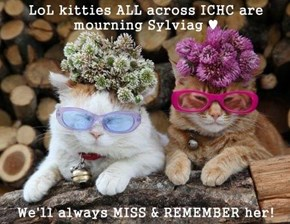 LoL kitties ALL across ICHC are mourning Sylviag ♥  We'll always MISS & REMEMBER her!