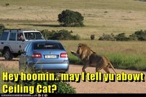 Hey hoomin.. may I tell yu abowt Ceiling Cat?