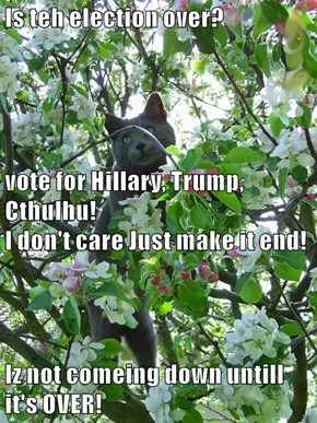 Is teh election over? vote for Hillary, Trump, Cthulhu!                                                I don't care Just make it end! Iz not comeing down untill it's OVER!