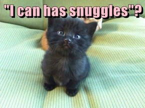 """""""I can has snuggles""""?"""