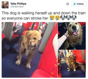This Dog Is All About Train Rides