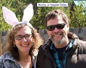 Sylvia bunny, in hoppier times