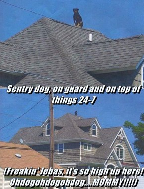 Sentry dog, on guard and on top of things 24-7 (Freakin' Jebas, it's so high up here! Ohdogohdogohdog....MOMMY!!!!)