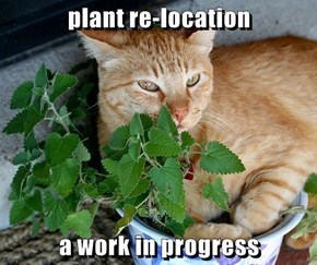 plant re-location   a work in progress