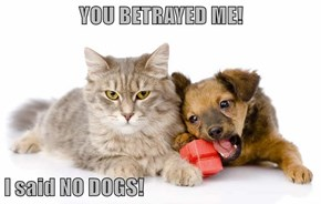 YOU BETRAYED ME!  I said NO DOGS!
