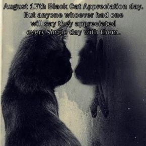 August 17th Black Cat Appreciation day.                                                                                                                                                                                                                       B