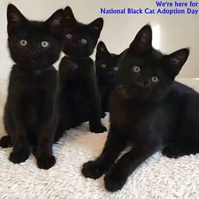 We're here for                                                                                                      National Black Cat Adoption Day