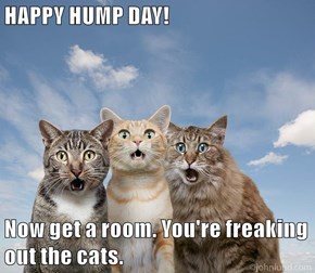 HAPPY HUMP DAY!