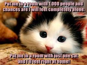 Feline felicity