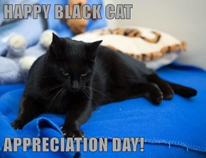 HAPPY BLACK CAT  APPRECIATION DAY!