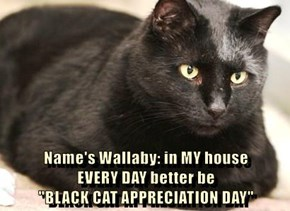 """Name's Wallaby: in MY house                     EVERY DAY better be                                         """"BLACK CAT APPRECIATION DAY"""""""