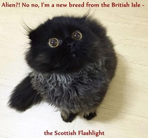 Alien?! No no, I'm a new breed from the British Isle -  the Scottish Flashlight