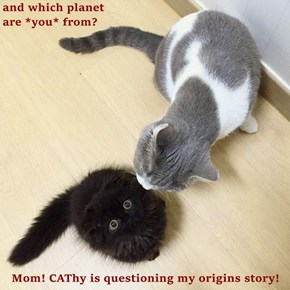 and which planet                                                          are *you* from?  Mom! CAThy is questioning my origins story!