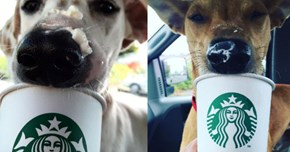 Rescue Dogs Take a Weekly Trip to Starbucks for a Delicious Puppuccino