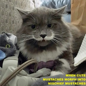 WHEN CUTE                                                   MUSTACHES MORPH INTO                                                      MISCHIEF MUSTACHES