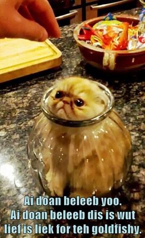 Ai doan beleeb yoo.                                         Ai doan beleeb dis is wut lief is liek for teh goldfishy.