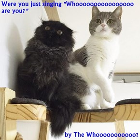 """Were you just singing """"Whoooooooooooooooo are you?""""  by The Whooooooooooo?"""