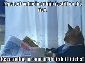 My stock value in catnip is still on the rise.  Keep rolling around in that shit kittehs!