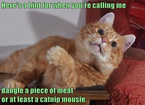 Here's a hint for when you're calling me  dangle a piece of meat                                                      or at least a catnip mousie.