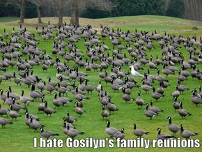 I hate Gosilyn's family reunions