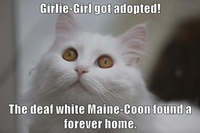 Girlie-Girl got adopted!  The deaf white Maine-Coon found a forever home.