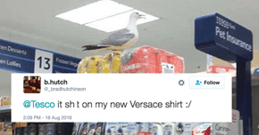 Deadbeat Seagull Forces Tesco to Close After Trashing Store and Attacking the Customers